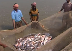 Indian-Fisheries